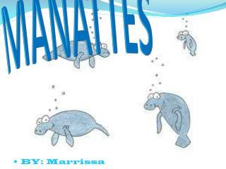 MANATTES