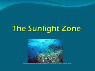 The Sunlight Zone