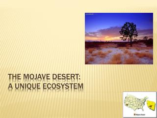 The Mojave Desert:  A Unique Ecosystem