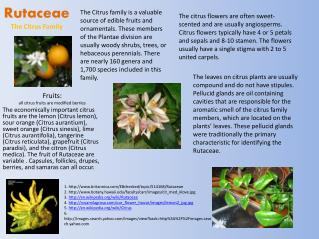 Rutaceae The Citrus Family