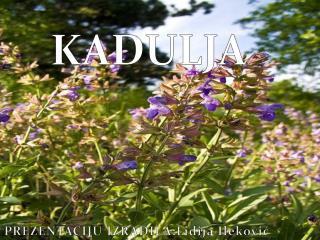 KADULJA