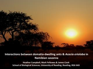 Interactions between domatia-dwelling ants &  Acacia erioloba  in Namibian savanna