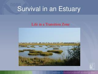 Survival in an Estuary