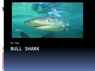 B ull Shark