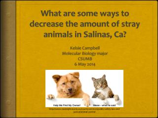 What are some ways to decrease the amount of stray animals in Salinas,  Ca ?