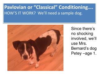 "Pavlovian or ""Classical"" Conditioning…. HOW'S IT WORK?  We'll need a sample dog."