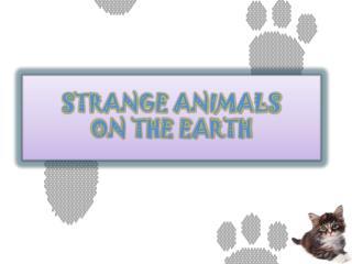 STRANGE ANIMALS                    ON THE EARTH