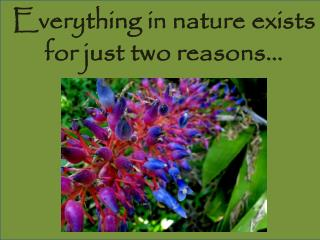 Everything in nature exists for just two reasons…