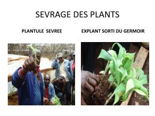 SEVRAGE DES PLANTS