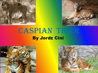 Caspian  Tiger