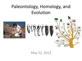 Paleontology, Homology, and Evolution