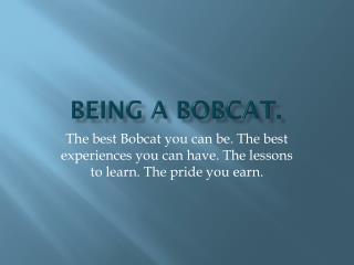 Being a bobcat.