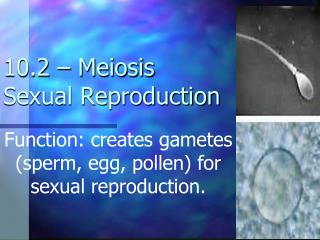 10.2 � Meiosis Sexual Reproduction