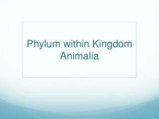 Phylum within Kingdom  Animalia