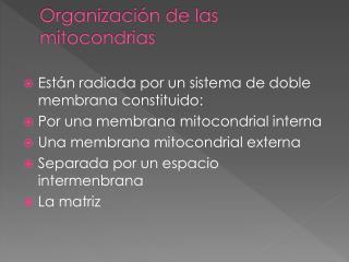 Organizaci�n de las mitocondrias