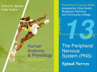 The Peripheral Nervous System (PNS ) Spinal Nerves