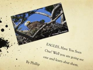 EAGLES, Have You Seen One? Well you are going see one and learn abut them.