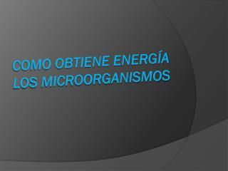 Como obtiene energía los microorganismos