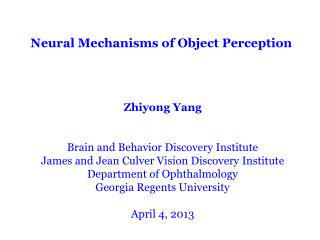 Neural Mechanisms of Object Perception