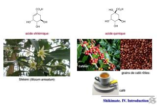 acide  shikimique