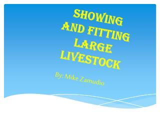 Showing and Fitting Large Livestock
