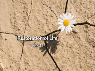 Restoration of Life John 11