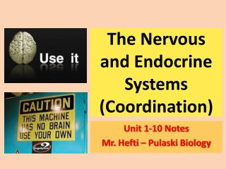 The Nervous and Endocrine  Systems ( Coordination )