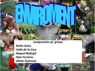 Components of  group: Belén Arias. Sofía de la Cruz. Raquel Bañegil. Nair Ferreira.