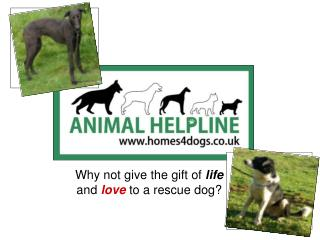 Why not give the gift of  life  and  love  to a rescue dog?