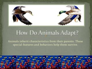 How Do Animals Adapt?