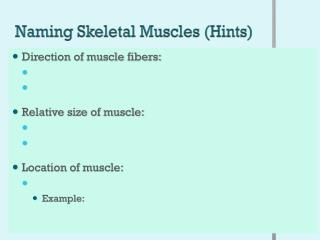 Naming Skeletal Muscles (Hints)