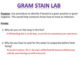 Gram Stain Lab