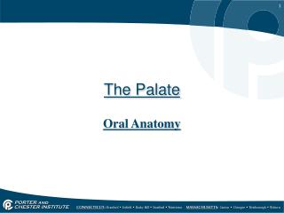 The Palate