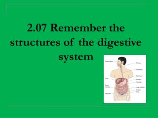 2.07 Remember the structures of the digestive system