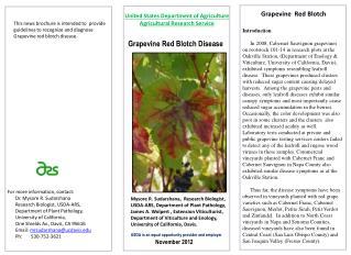 Grapevine Red Blotch Disease