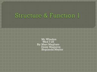 Structure & Function 1