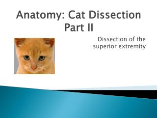 Anatomy: Cat Dissection Part II