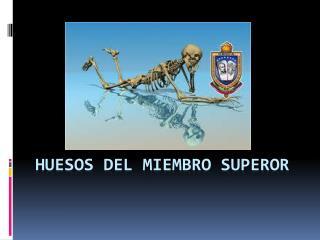 HUESOS DEL MIEMBRO SUPEROR