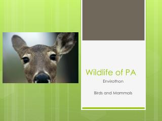 Wildlife of PA
