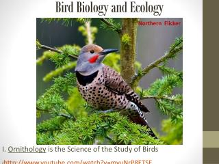 Bird Biology and Ecology