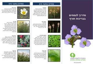 מדריך לצמחים בבריכות חורף