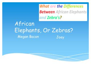 African Elephants, Or Zebras?