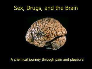Sex, Drugs, and the Brain