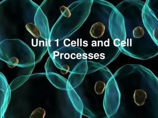 Unit 1 Cells and Cell Processes