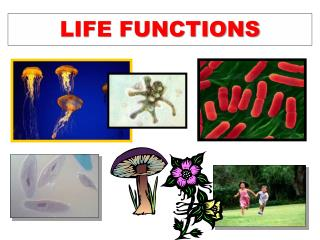 LIFE FUNCTIONS