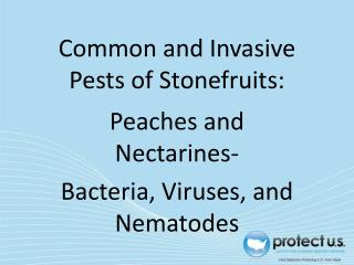 Common and Invasive Pests of Stonefruits: