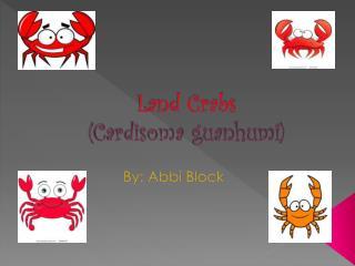 Land Crabs (Cardisoma guanhumi)