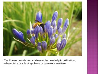 The flowers provide nectar whereas the bees help in pollination.