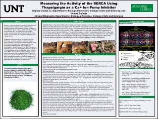 Measuring the  Activity  of the SERCA  Using  Thapsigargin as a Ca+  Ion Pump Inhibitor