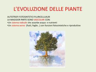 L EVOLUZIONE DELLE PIANTE